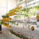 Al aire system planting