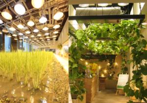 Group Urban Farm
